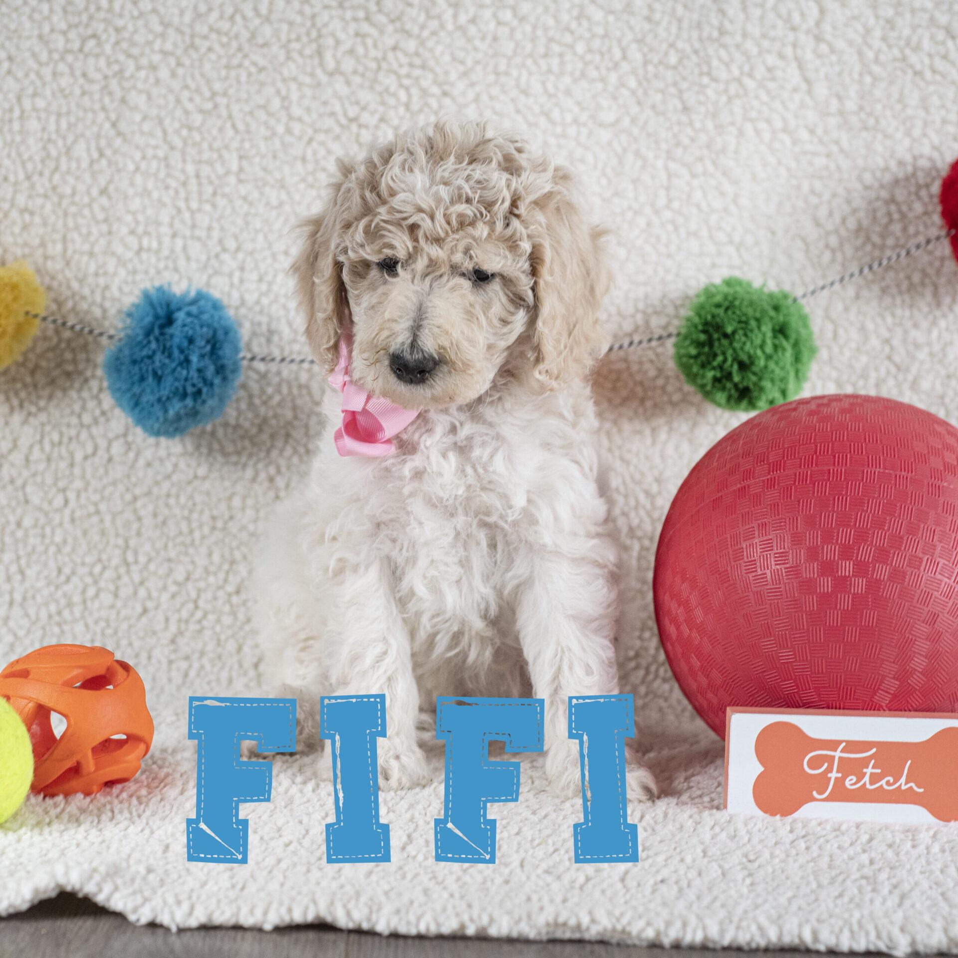 fifi2
