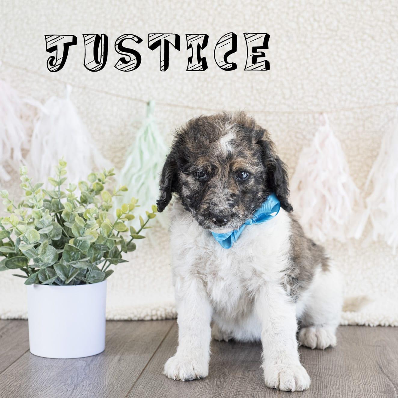 justice copy