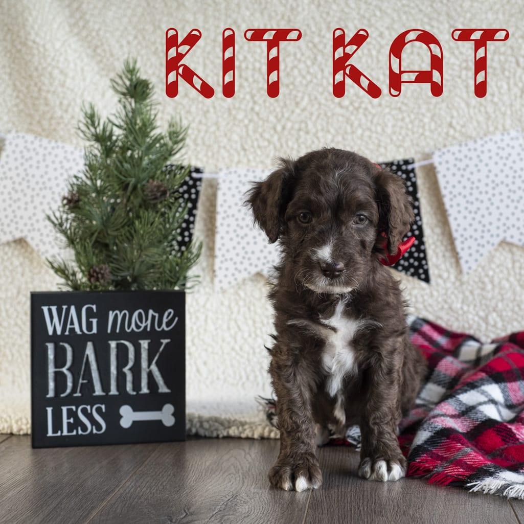 kit kat copy