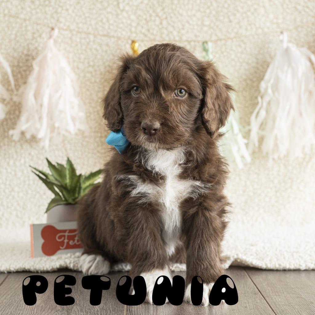 petunia_1