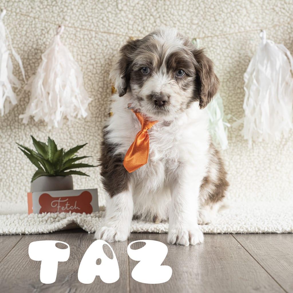 taz2_1
