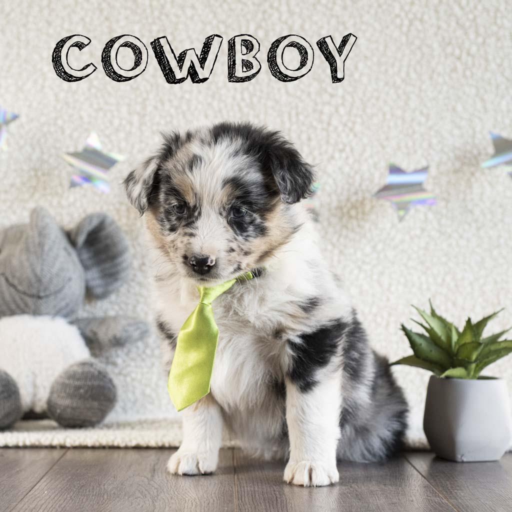 cowboy copy