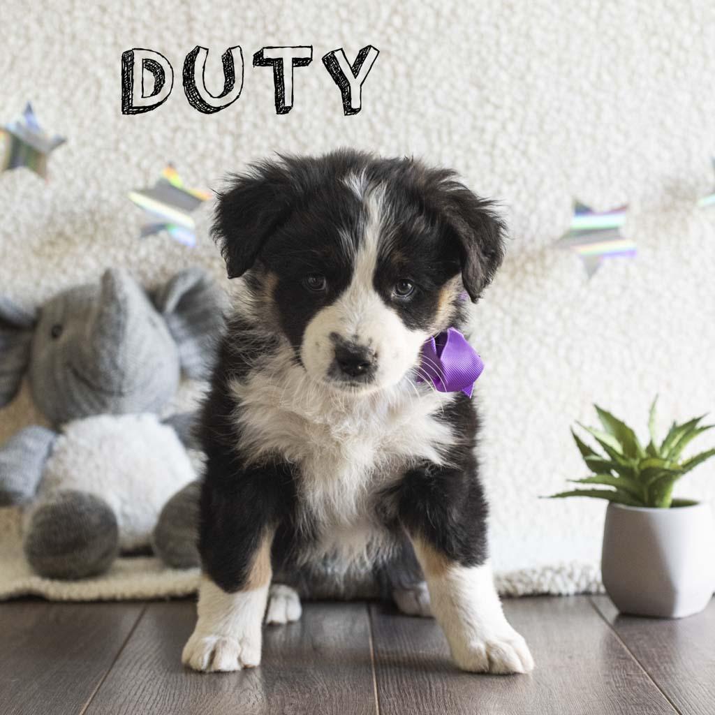duty copy