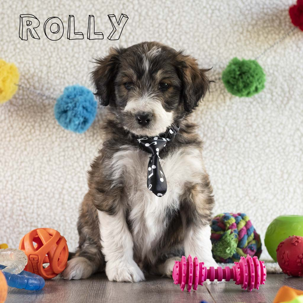rolly copy